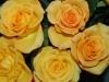 rosen-gelb