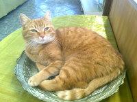 Gärtnerei Katze Sandy